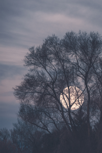 grunge-landscape-moon-moonlight-Favim.com-2057056