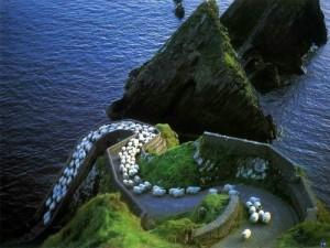 Uniqueness… Ireland-landscape-mountains-nature-sheep-favim-com-240673