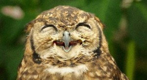 owl-400x219