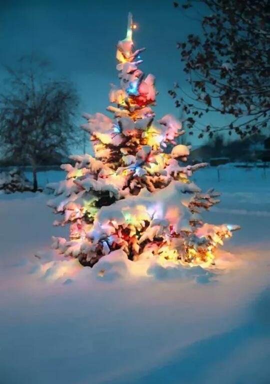 Early Christmas Greetings… | World Metamorphosis