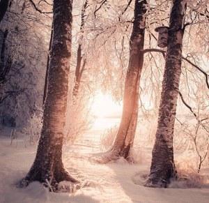 beautiful-camera-cole-divine-Favim.com-2516912