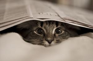 animals-cat-friends-looking-Favim.com-1191775