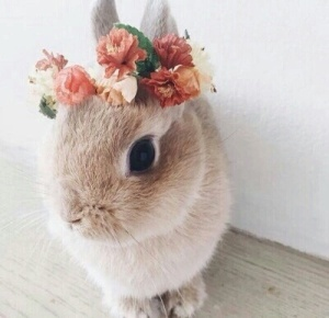 aww-beautiful-bunny-conejo-Favim.com-4038782