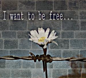 Change….... Daisy-fence-flower-free-favim-com-2734258