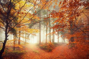 Which Path? Autumn-fall-forest-leaves-favim-com-4668053