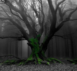 Roots… by Visionkeeper Black-and-white-choices-happiness-life-favim-com-984639